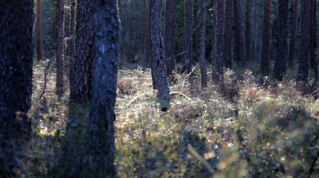 valgejärve - estonia