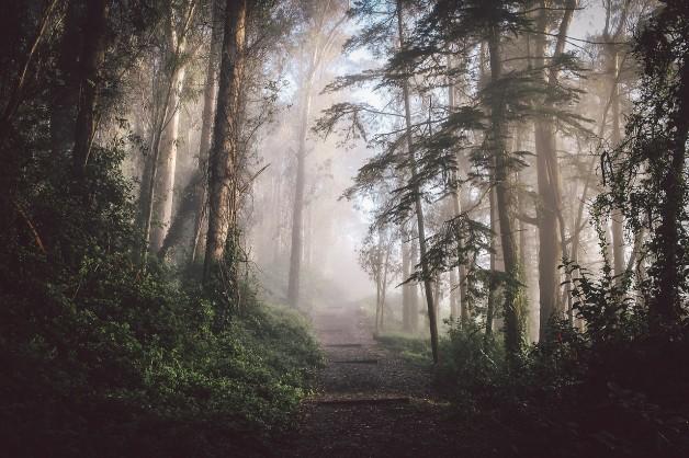 nature envoûtante