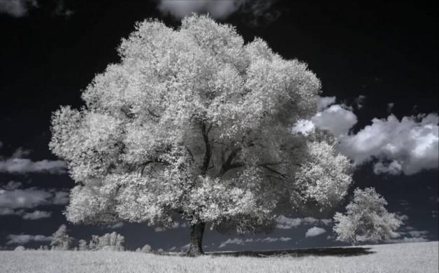 nature infrarouge