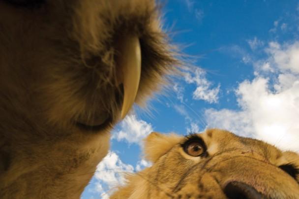 animaux étonnants