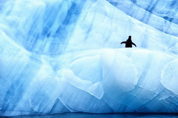 photo glace pingouin