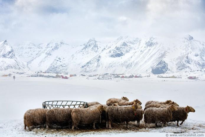 l'Arctique en photographie
