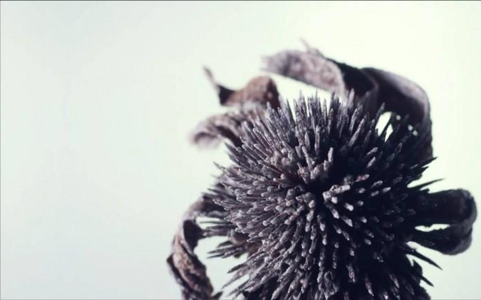 nature gelée