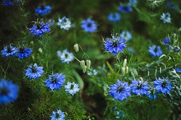 flore des montagnes