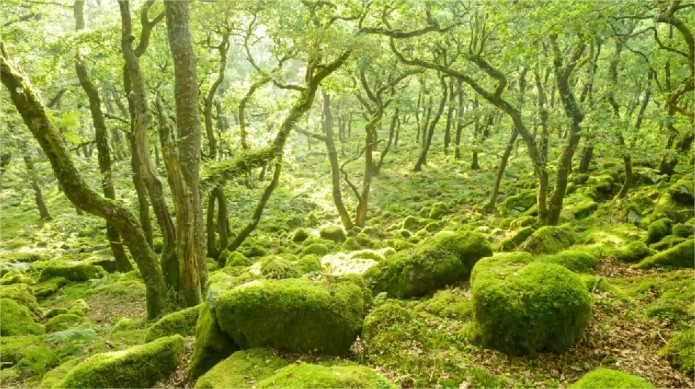 Dartmoor4
