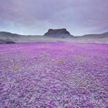 désert badlands