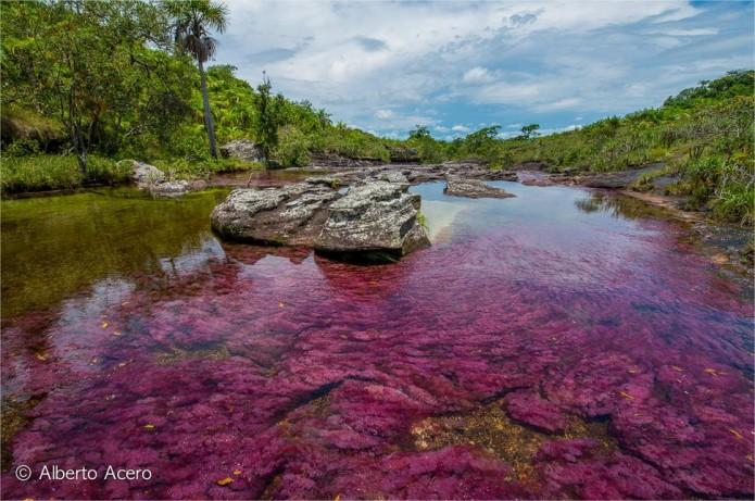 Caño Cristales rivière colorée