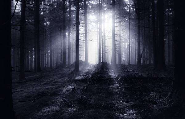 paysage forêts nuit