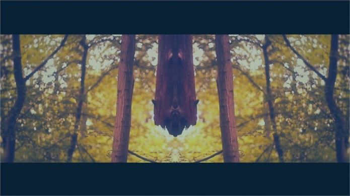 forêt olivier latta