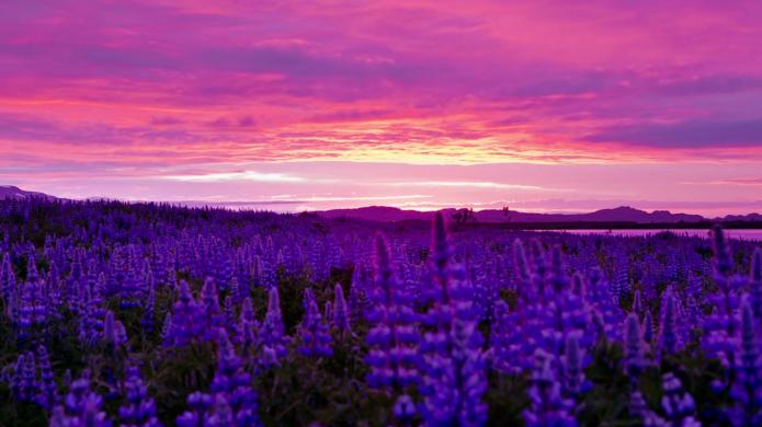 IslandeViolet