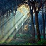 1.Forest Moyan Brenn