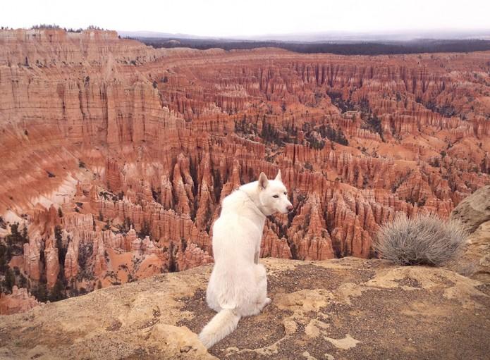 1.John & Wolf - Bryce Canyon, UT