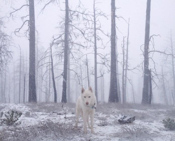 John & Wolf - Bryce Canyon, UT 2