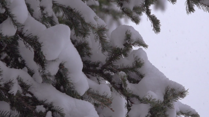 Winter wander_ Justin Majeczky 10
