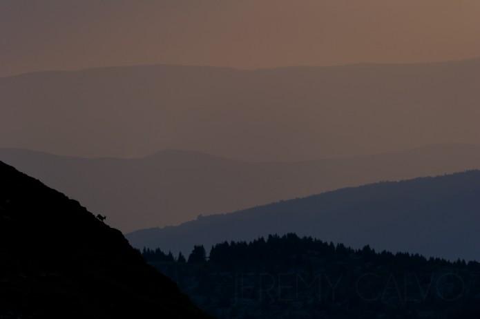 bouquetin des Alpes - capra ibex_juin2014