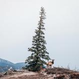 Christopher Amat, montagnes rocheuses, Canadian rockies