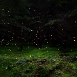 Enchanted forest / Forêts enchantées par Ellie Davis