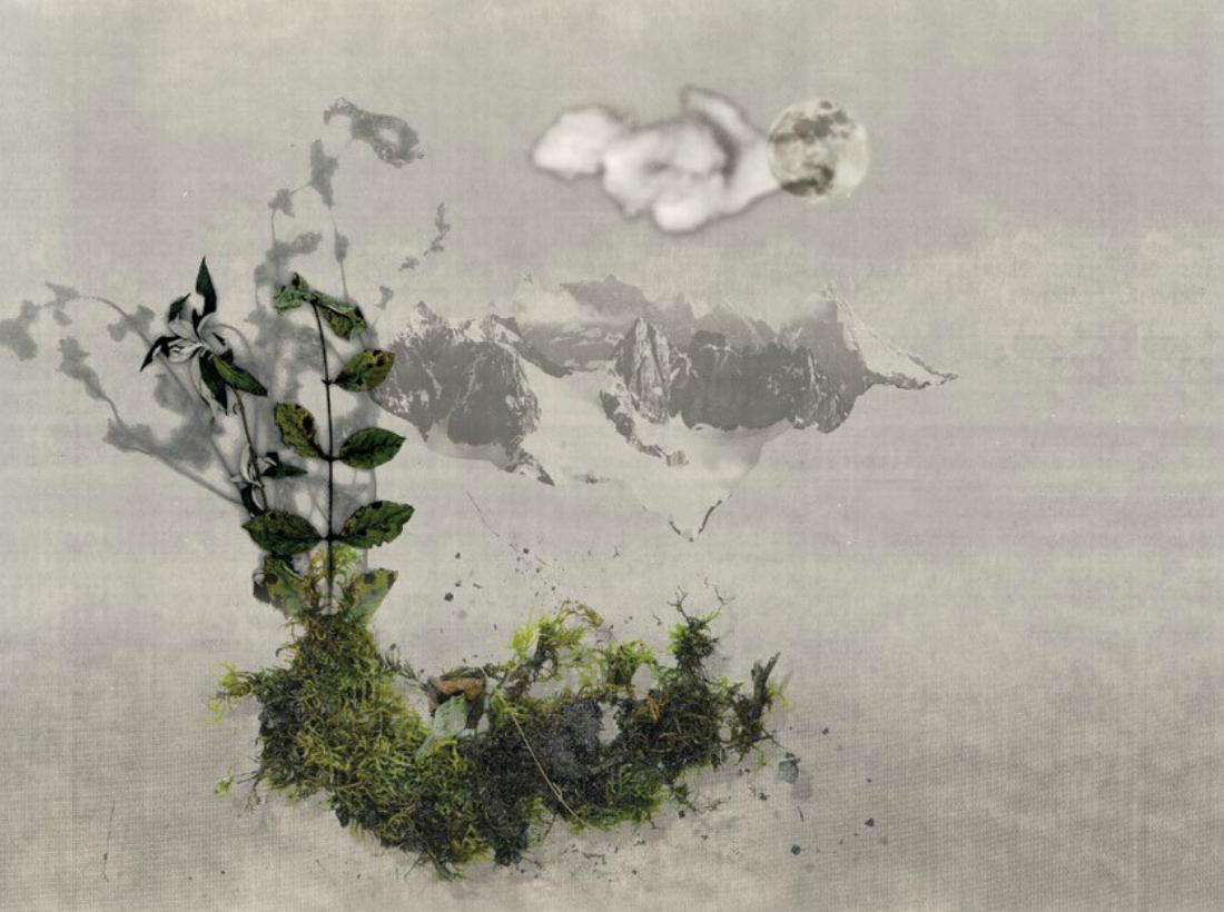 Illustration fleur hiver lydie perret