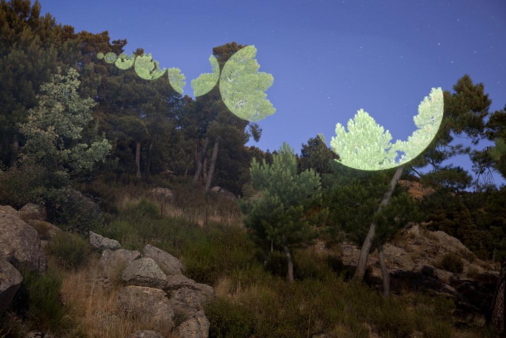 Javier Riera nature landscape