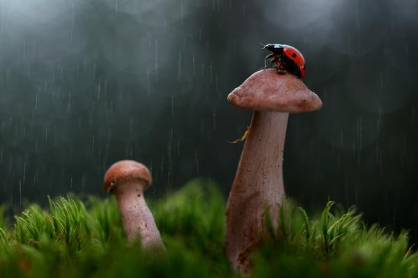 Vadim Trunov animal photographer