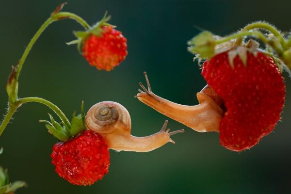 Vadim Trunov photographe animaux