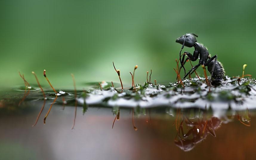 macro nature photographer Vadim Trunov