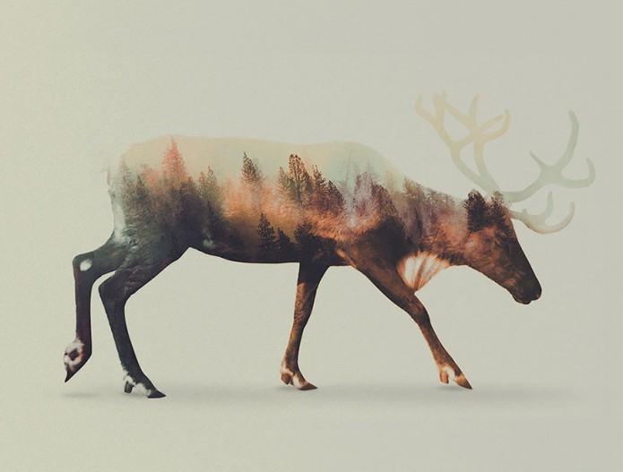 Portrait d'animaux Andreas Lie_Cerf
