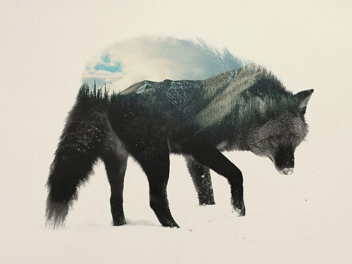 Portrait d'animaux Andreas Lie_Loup