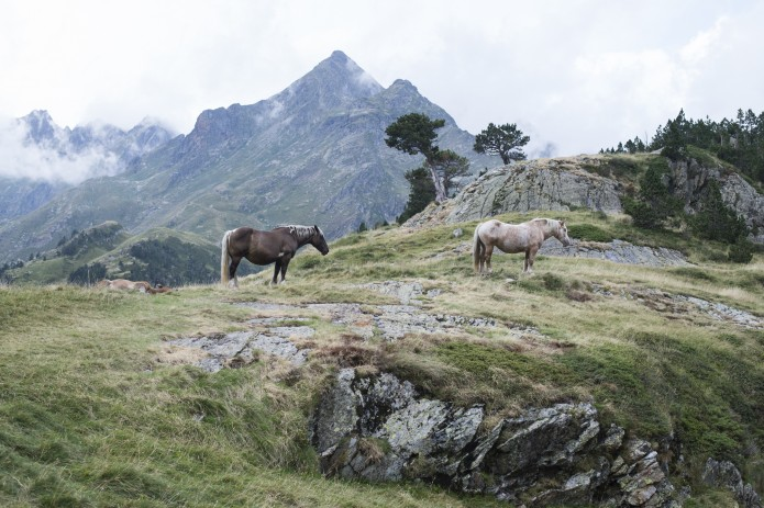 Autour d'Espingo, tournée des refuges de montagne Facteurs Chevaux