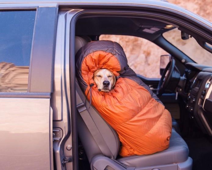 Camping dog Maddie the dog