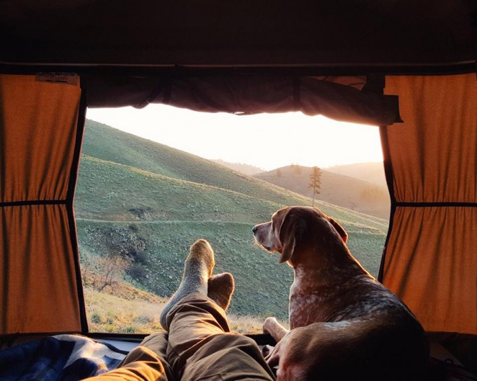 camper avec son chien Maddie the dog