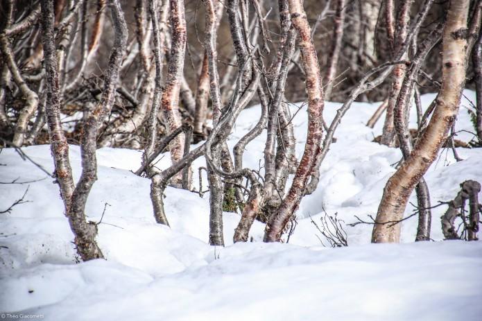 Giacometti-hikingonthemoon.norvege18-Faune et Flore