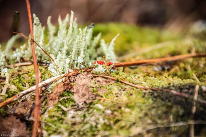 Giacometti-hikingonthemoon.norvege22-Faune et Flore