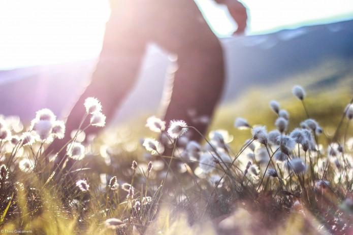 Giacometti-hikingonthemoon.norvege26-Faune et Flore
