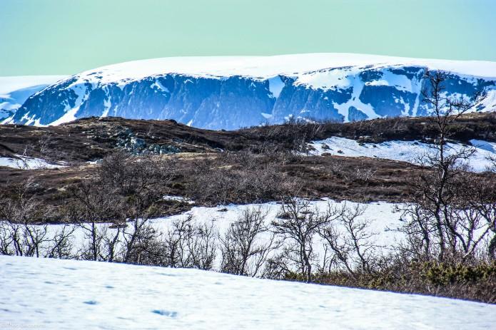 Norvège glacier
